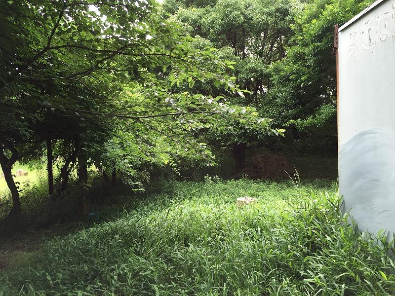 水飲み場草刈前 (1)