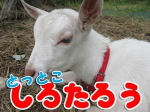 shirotarou01