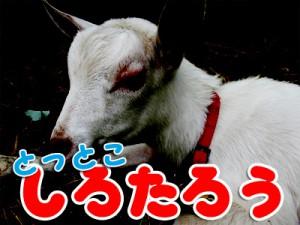 shirotarou05