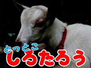 shirotarou06