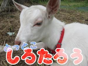 shirotarou07