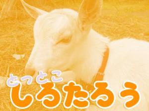 shirotarou08