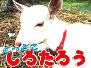 shirotarou09