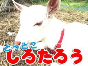 shirotarou10
