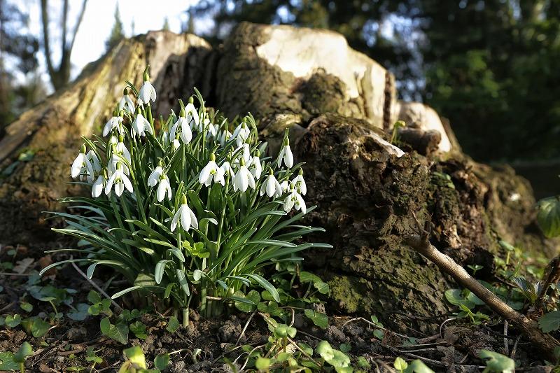 spring-630082_1920