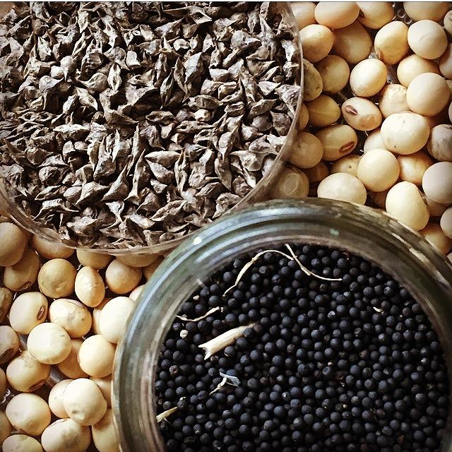 Share Seeds box あります!のイメージ