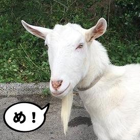 YAGI(しろたろう)のイメージ